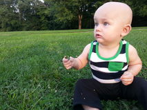Little Boy Sitting in Grass Holding a Clover Stock Photography