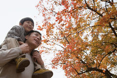 Little boy sitting on his fathers shoulders, walking through the park in autumn stock image