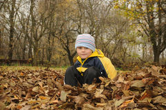 Little boy sitting in leaves Stock Images