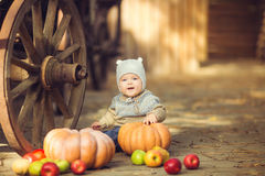 Little boy sitting outdoors in the village. Pumpkins and apples around Stock Photos