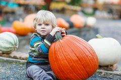 Little boy sitting on pumpkin patch Stock Photos