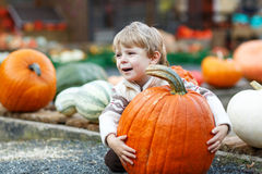 Little boy sitting on pumpkin patch Stock Photography