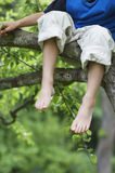 Little Boy Sitting On Tree Branch. Low section of little boy sitting on tree branch Royalty Free Stock Image