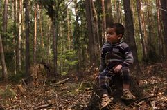 Little boy sitting on a tree stump in the woods Stock Photos
