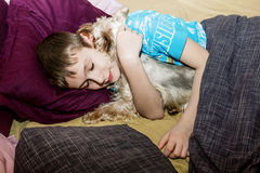 The little boy is sleeping in the bed with a small dog Royalty Free Stock Photography