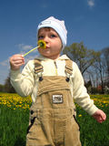 Little boy smell flower Stock Image