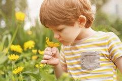 Little boy smelling daisy. Royalty Free Stock Image