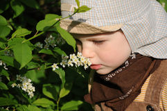 Little boy smelling flower Royalty Free Stock Photos