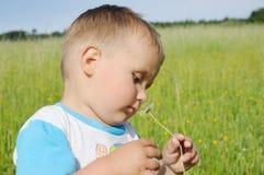 Little boy smelling marguerite Stock Image