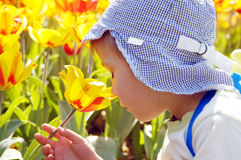 Little boy smells tulip Royalty Free Stock Photography
