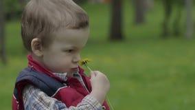Little boy sniffs a dandelion stock footage