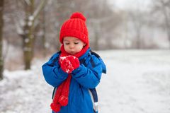 Little boy in the snow Royalty Free Stock Photos