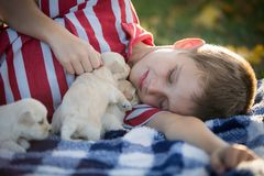 Little boy snuggling with cute tan puppies. A close up of a boy laying on a blue and white checkered blanket snuggling with cute little tan puppies stock image