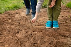 Little boy sowing vegetables in the home garden Royalty Free Stock Images