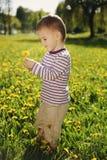 Little boy in spring dandelion meadow Royalty Free Stock Image