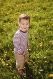 Little boy in spring dandelion meadow Stock Photography