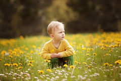 Little boy on the spring meadow Stock Image