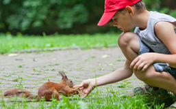 Little boy and squirrel Royalty Free Stock Photo
