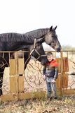 A little boy stands near beautiful brown horses. Outdoors. royalty free stock image