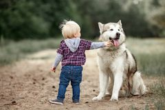 Little boy stands near malamute dog on walk in forest and touche. Little boy stands near malamute dog on walk along forest road and touches him tongue Royalty Free Stock Image