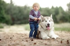 Little boy stands near malamute dog on walk in forest. Little boy stands near lying malamute dog on walk along forest road Royalty Free Stock Photos