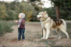 Little boy stands near malamute dog on walk in forest and smiles. Little boy stands and smiles near malamute dog on walk along forest road Royalty Free Stock Images