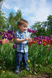 Little boy stands near tulips Stock Photos