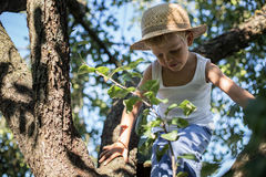 Little boy with straw hat climbing a tree Stock Image