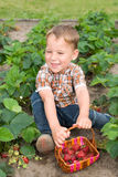 Little boy in strawberry patch Stock Photography