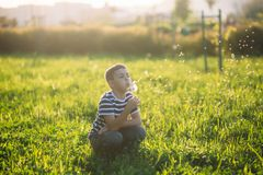 Little boy in a striped T-shirt blowing a dandelion.Spring, sunny weather.  stock image