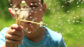 Little boy in a striped T-shirt blowing a dandelion.Spring, sunny weather. Video stock video