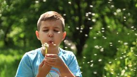 Little boy in a striped T-shirt blowing a dandelion.Spring, sunny weather. Video stock footage