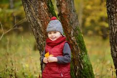 Little boy during stroll in the forest at sunny autumn day. Active family time on nature. Hiking with little kids royalty free stock images