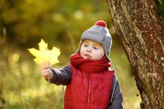 Little boy during stroll in the forest at sunny autumn day. Active family time on nature. Hiking with little kids stock images