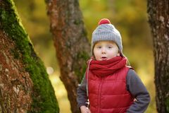 Little boy during stroll in the forest at sunny autumn day. Active family time on nature. Hiking with little kids stock image