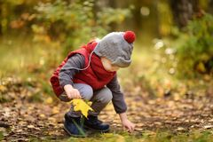 Little boy during stroll in the forest at sunny autumn day. Active family time on nature. Hiking with little kids royalty free stock photo
