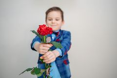 Little boy in suit standing with red rose, isolated on a light background royalty free stock photos