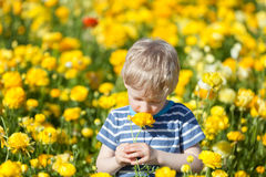 Little boy at summer Royalty Free Stock Photography