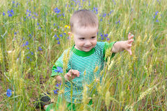 Little boy on the summer meadow Royalty Free Stock Photos