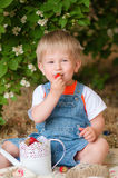 Little boy in the summer with strawberries Royalty Free Stock Photos