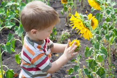 Little boy with sunflower Royalty Free Stock Photo