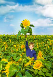 Little boy in a sunflower field. Boy holding a special sunflower in hand Stock Images
