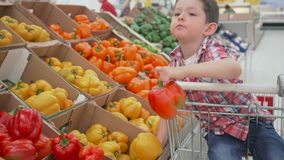 Little boy in supermarket smelling yellow bulgarian peppers sitting in the trolley. Shopping in store, fresh products. Little boy in supermarket choosing stock video footage