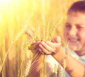 Little boy taking wheat ears Royalty Free Stock Images