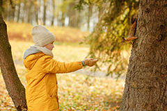 Little boy teenager in a yellow jacket in the fall, feeding squi Stock Image