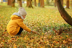 Little boy teenager in a yellow jacket in the fall, feeding squi Stock Photography