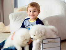 Little boy three years old playing with white puppies Royalty Free Stock Photos