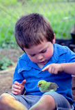 Little boy touching baby chick Royalty Free Stock Photo