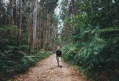 Little boy tourist backpacker walks through forest with giant tr Royalty Free Stock Photos