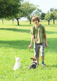 Little boy training dogs Stock Photography